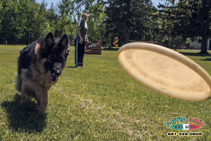 Think Twice Before Throwing That Frisbee