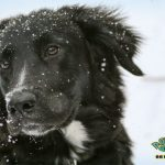 Keep Your Pets Healthy And Warm This Winter